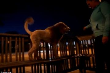 dog with mane
