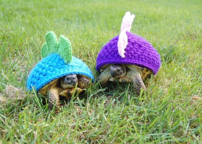 fashion tortoise