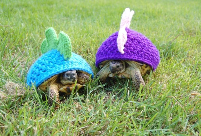 fashion tortoise