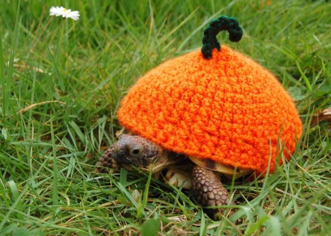 tortoise hat