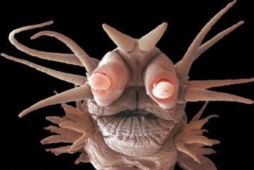 weird strange animal