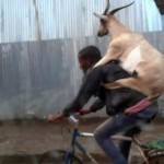 Goat Backpack