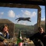 Top 5 Animal Photobombs