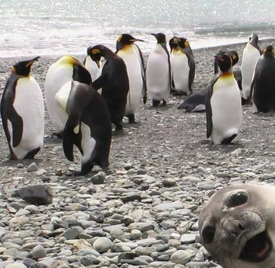 freaky photos