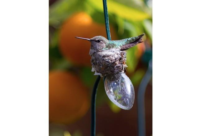 strange birds nest