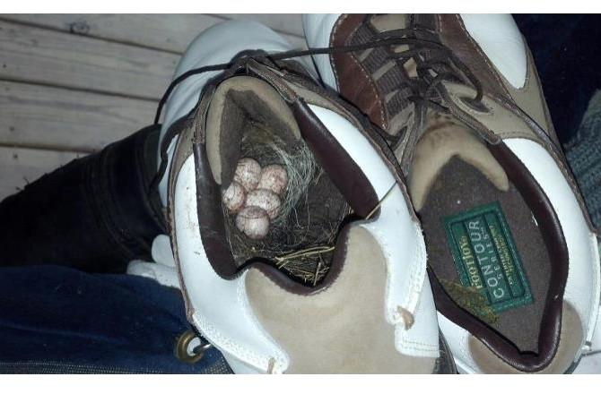 shoes birds nest