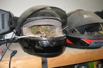 Weird Birds Nests