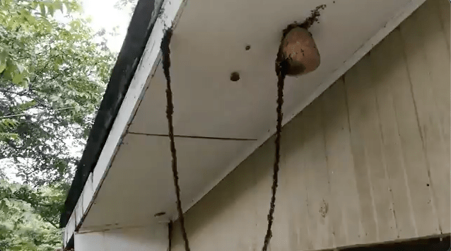 freaky ant video