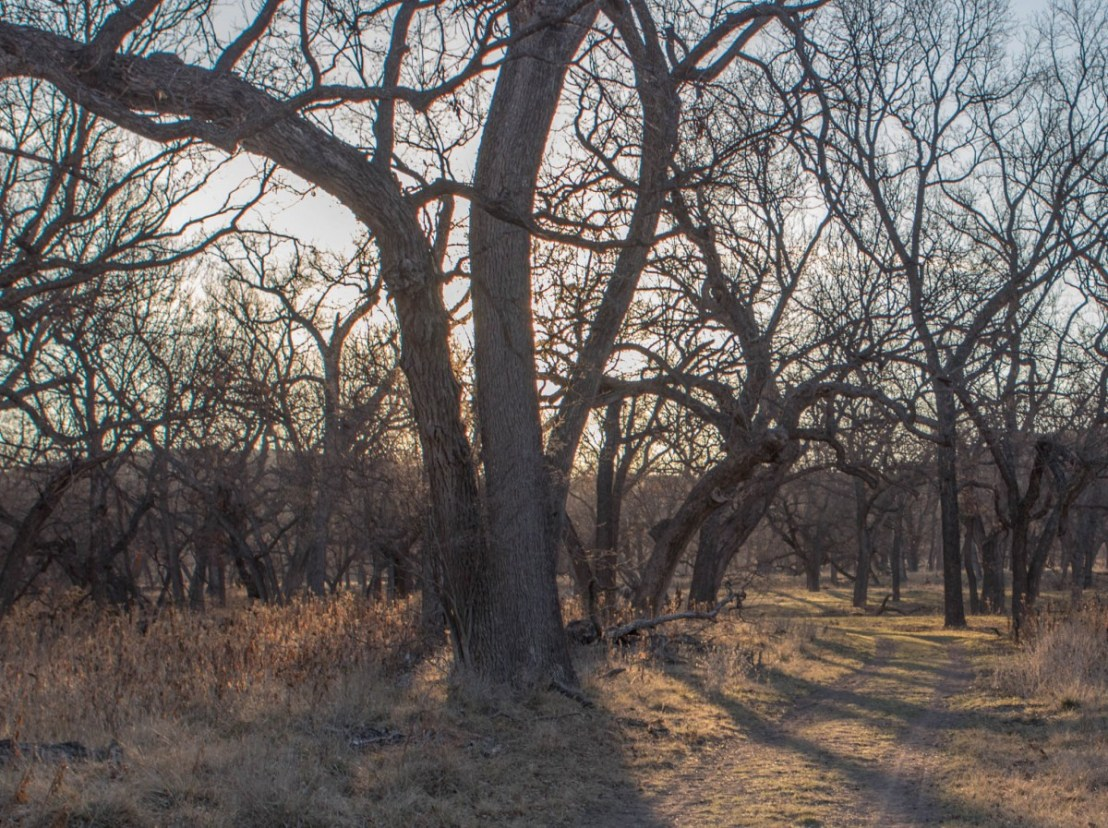 Trail Through Native Pecan Grove