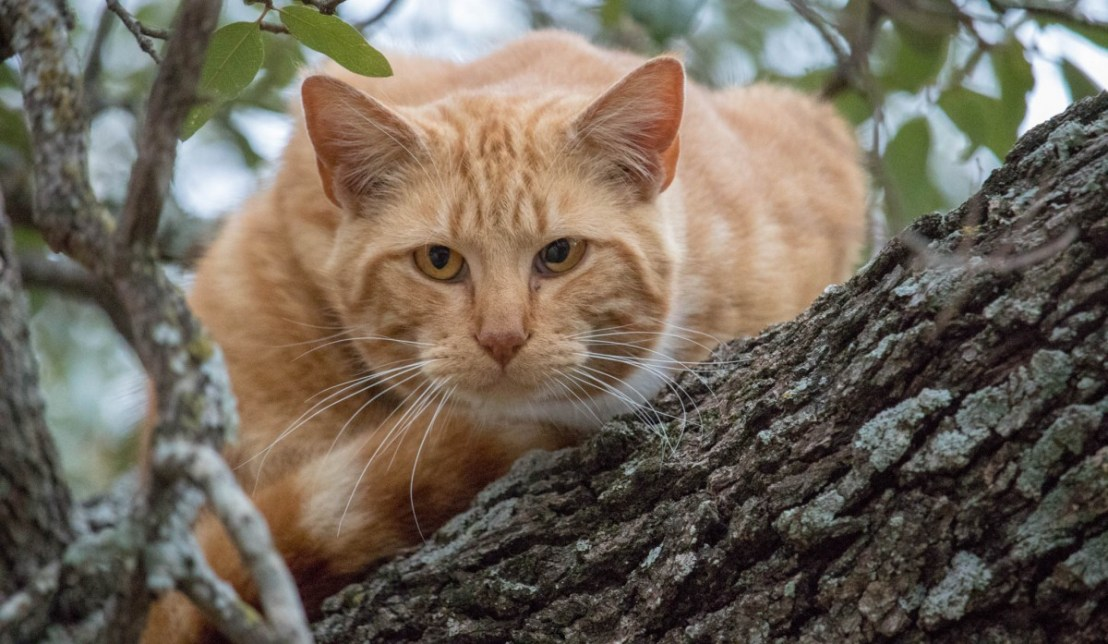 Stray Cat Perched in Tree