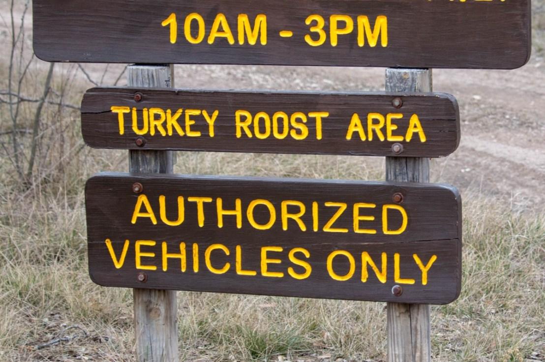 Turkey Roosting