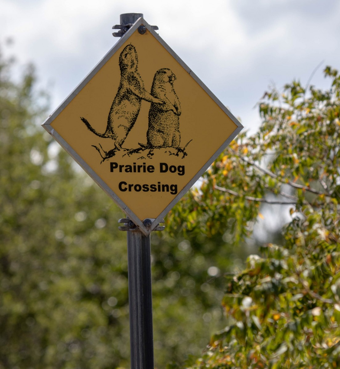 Prairie Dog Crossing Sign