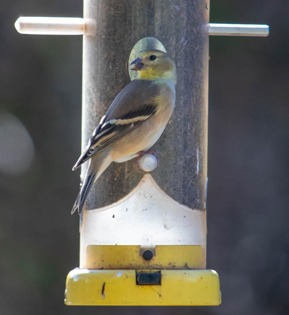 Bird Feeder At Bird Blind