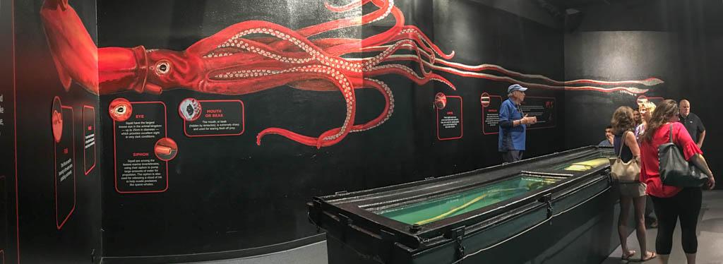 Man-Eating Giant Squid Display