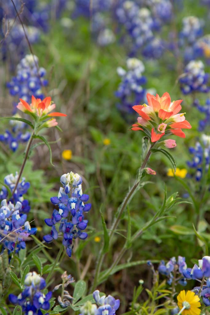 Coyote Run Nature Trail - Wildflower Closeups