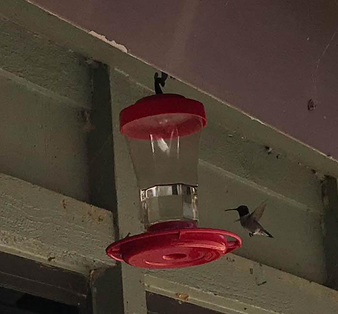 Ranger Station Hummingbird Feeder