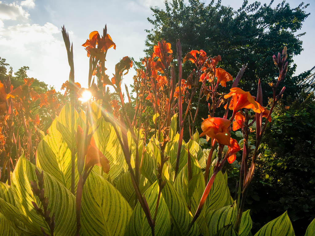 Sun Setting Behind Flowers