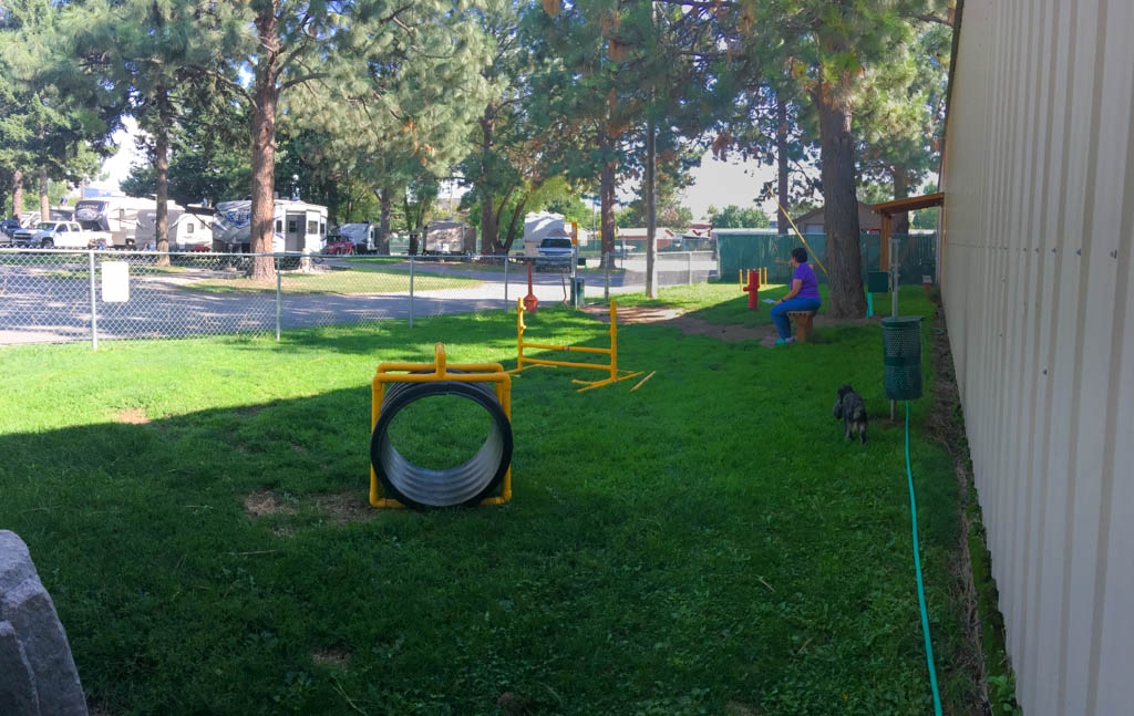 Dog Park With Afternoon Shade