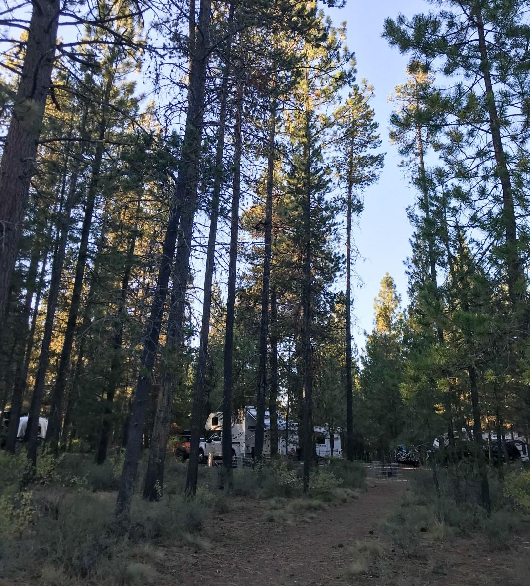 Trail Behind Campsite