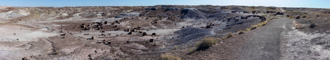 Petrified Forest National Park Crystal Forest