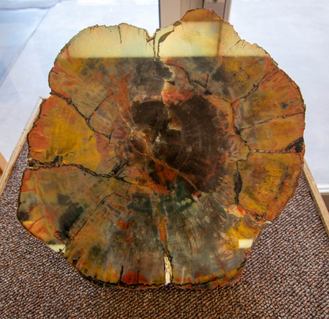 Petrified Forest National Park Painted Desert Visitor Center Petrified Wood Example