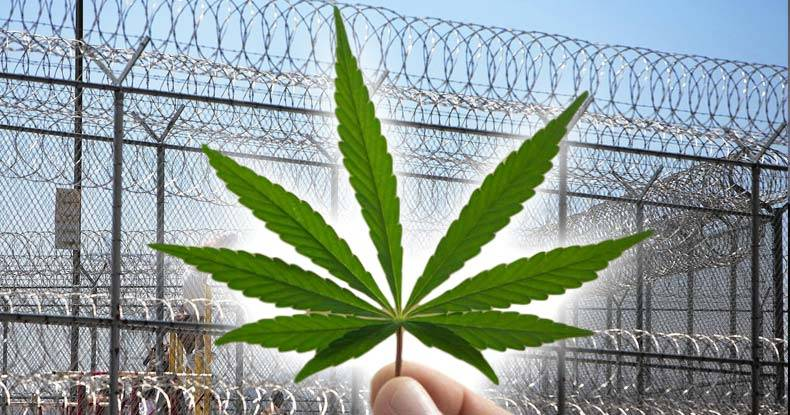 Image result for cannabis production energy