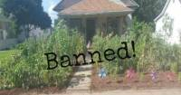 Man Charged with a Crime and Fined for Growing a Vegetable ...