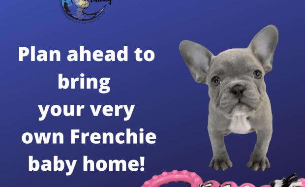 See Upcoming French Bulldog Litters