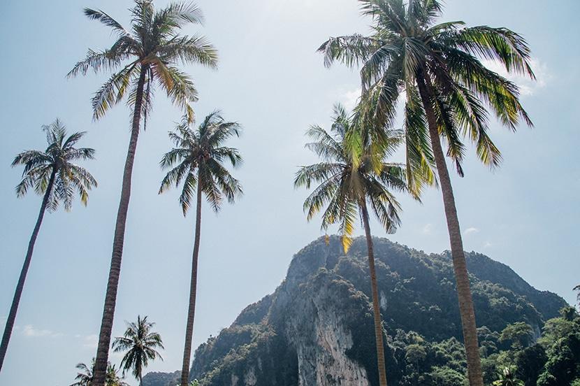 ko-phi phi palmiers
