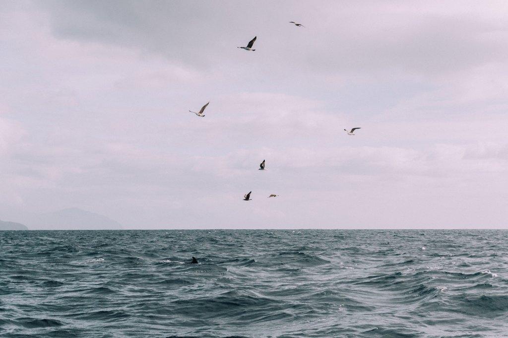 dauphin sao miguel