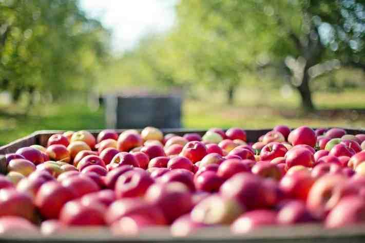 Pommes : comment choisir ton vendeur