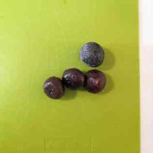 Figues pour figues hachée