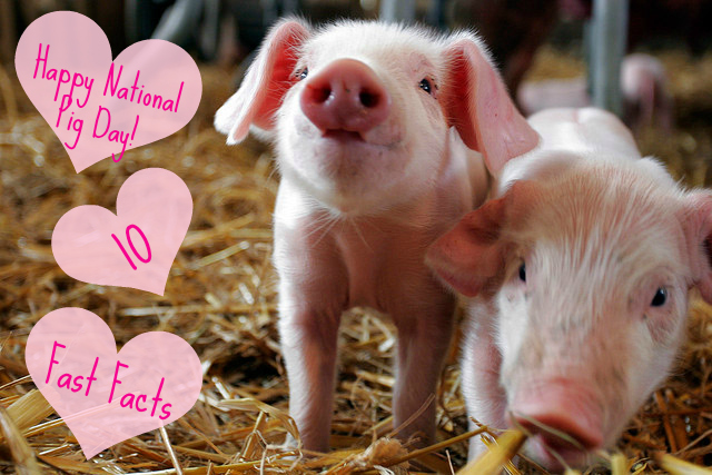 National Pig Day 10 Fast Facts  The Friendly Fig