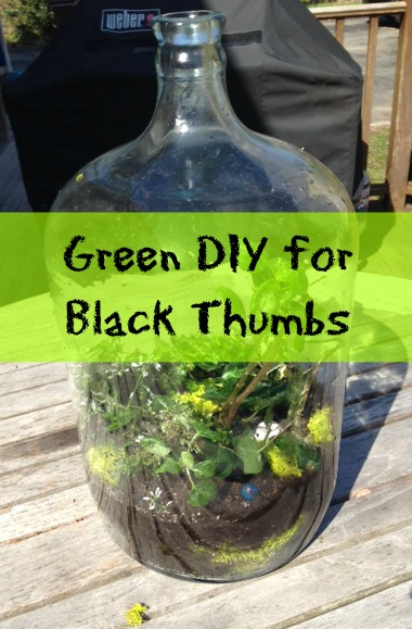 DIY Terrarium - The Friendly Fig