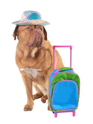 Pet travel concept
