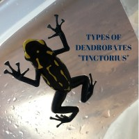 "Types of Dendrobates ""Tinctorius"" with pictures"