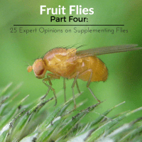 26 Pros thoughts on Fruit Fly Supplementation