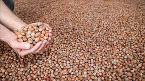 Turkey earns nearly $1.8b in hazelnut exports