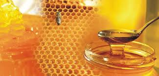 Honey export potential