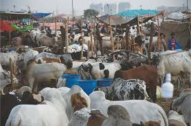 Govt issues code of conduct for collecting sacrificial hides in Sindh