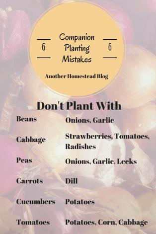Companion Planting No-Nos