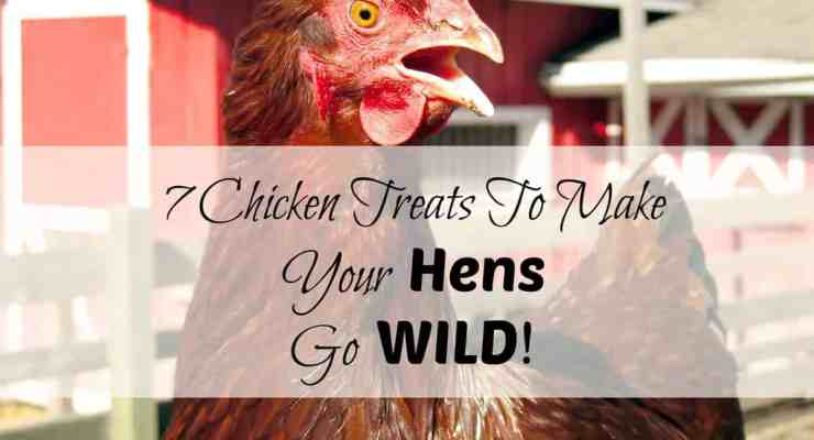 Surprise That Hen: Treats For Your Chickens To Make Them Go WILD!