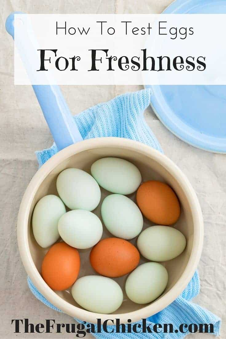 Try the egg float test to see if your eggs are good or bad. Come across a nest of eggs and don't know if they're good or bad? Test them! From FrugalChicken