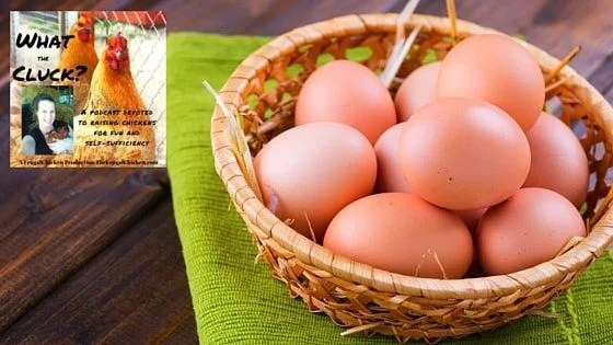 10 Weird Chicken Eggs And What They Mean [Podcast]
