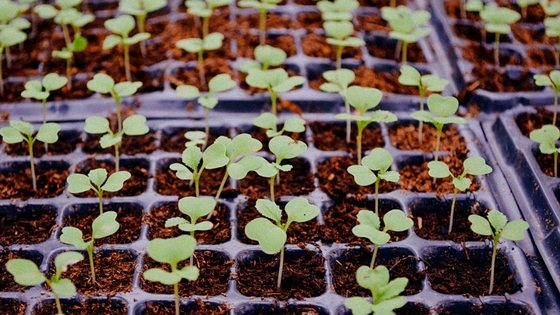 What Seedlings Can You Start In February? [Planting Guide]