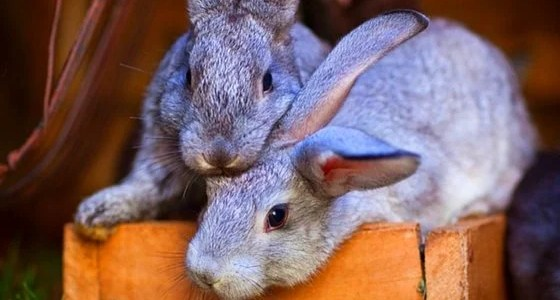 how to feed your rabbits for free feature
