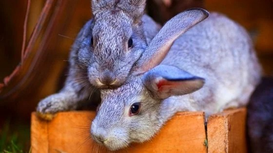 Grow Free Food For Rabbits & Chickens! Here's How We Did it!