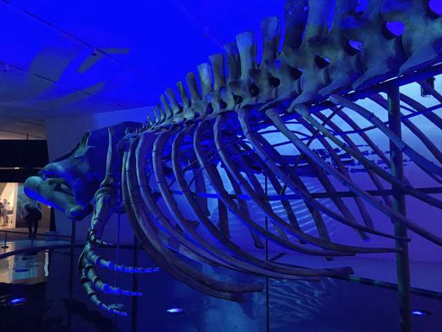 blue whale exhibit