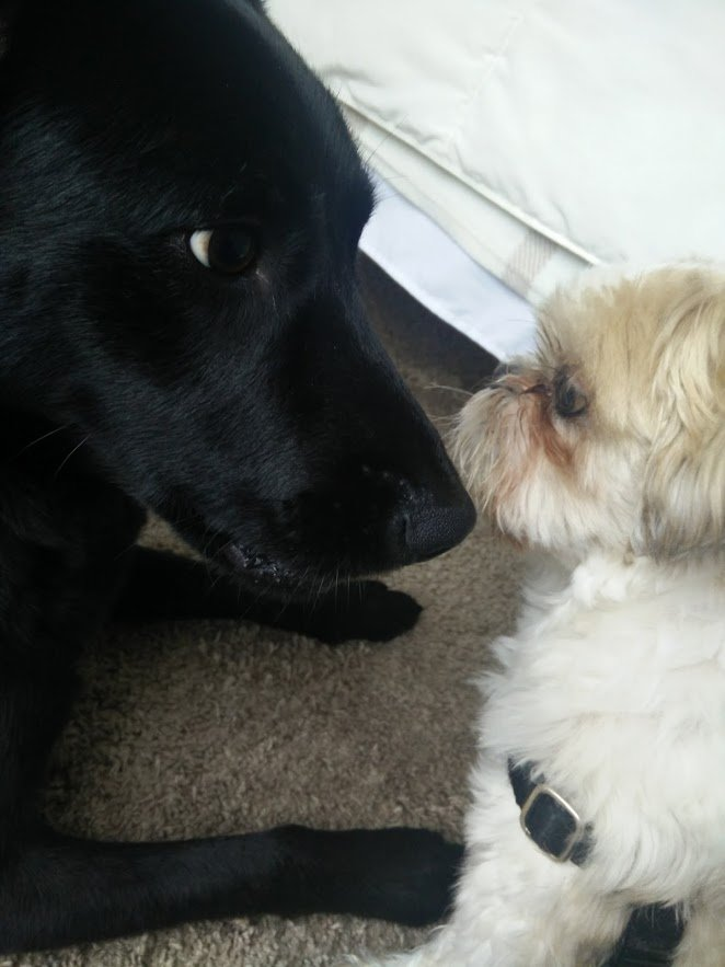 doggies-have-weird-faces