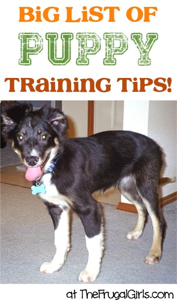 BIG List of Puppy Training Tips and Tricks at TheFrugalGirls.com